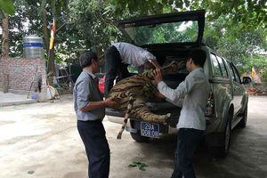Chuyển giao một tiêu bản hổ về Bảo tàng Thiên nhiên Việt Nam