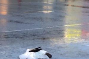 Cơn 'mưa ngỗng' trút xuống thành phố Mỹ
