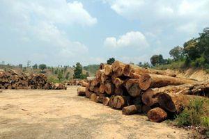 Làm rõ việc vận chuyển gần 85m3 gỗ không có trong hồ sơ