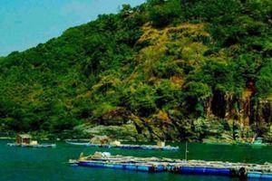 Cà Mau: Thành lập tổ kiểm tra việc nuôi động vật trái phép trên đảo