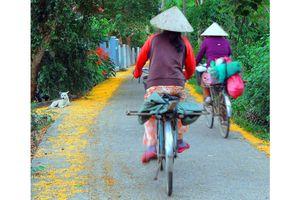 Con đường hoa sưa