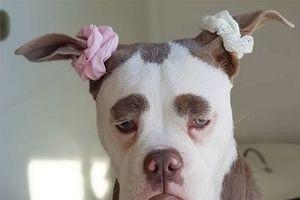 Chú chó với gương mặt luôn buồn rầu 'đánh lừa cả thế giới'