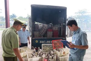 Bắt giữ 945 con chim bồ câu nhập lậu