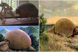 Phát hiện hóa thạch loài thú răng chạm có niên đại 600.000 năm