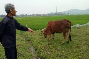 Chăn thả trâu, bò phải đóng phí đồng cỏ: Sẽ xin lỗi và trả lại tiền cho dân