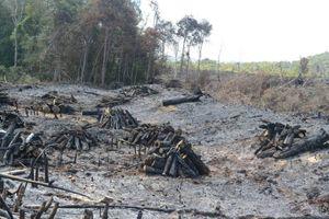 Vụ phá gần 15 hecta rừng ở Đắk Nông: Chính thức khởi tố cháu Chủ tịch công ty về tội 'nhận hối lộ'