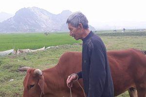 Thanh Hóa: 'Thu phí chăn thả trâu bò đã có từ lâu đời'?