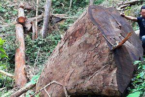 Vụ 'Xâm nhập công trường gỗ lậu': Kỷ luật khiển trách 3 cán bộ kiểm lâm