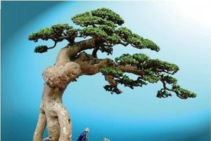 Tác phẩm Duối cổ thụ 'Thế Võ Bình Định' của nghệ nhân Huỳnh Thanh Tuyên