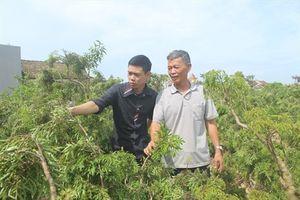 Nam Định chuyển mình từ xây dựng NTM