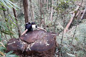 Kỷ luật khiển trách 3 cán bộ kiểm lâm để mất rừng tại Gia Lai