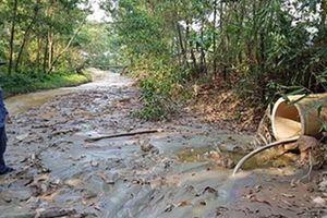 Cá chết trên sông Bồng Miêu: Doanh nghiệp 'tham bát bỏ mâm'