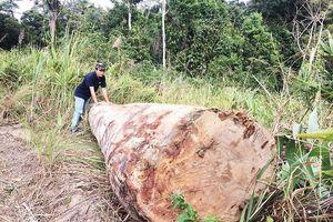 Kỷ luật hạt trưởng kiểm lâm vụ 'lâm tặc khoét núi phá rừng'