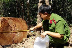 Để mất rừng, 3 cán bộ kiểm lâm ở Gia Lai bị kỷ luật khiển trách