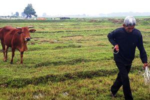 Vụ đóng 'thuế' để chăn thả gia súc: Buộc hoàn trả khoản phí trái pháp luật cho người dân trước 30/4