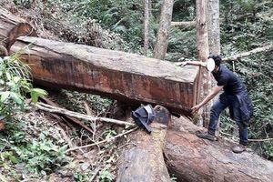 Gia Lai: Khởi tố vụ phá rừng quy mô lớn ở rừng Chư Đăng Ya