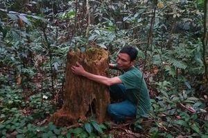 Người dân điêu đứng vì nạn phá rừng ở Đà Bắc