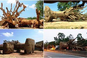 Vụ cây 'khủng' ở Đắk Lắk: Thanh tra Sở không có hành vi bao che?