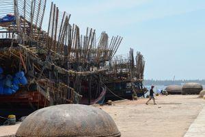 Ngư dân Quảng Nam kiếm tiền tỷ nhờ câu mực khơi