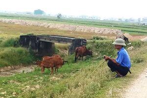 'Trâu bò cõng phí'… Chuyện 'lạ đời' nhưng không lạ ở xứ Thanh
