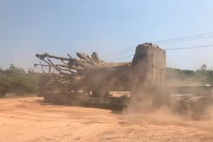 Hé lộ đích đến thực sự của ba cây đa đang 'mắc kẹt' ở Huế