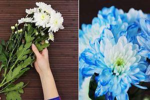 Khỏi cần mua hoa đắt tiền, có ngay bình hoa màu độc lạ bằng cách nhuộm quá đơn giản