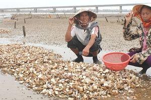Xác định nguyên nhân nghêu chết trắng đồng ở Hà Tĩnh
