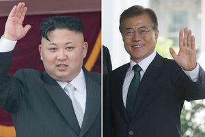Thông tin thú vị về cây thông sẽ được lãnh đạo Triều Tiên và Hàn Quốc trồng chung