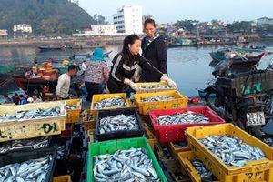 Nhộn nhịp bến cá Nghi Thủy