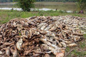 Bình Phước: Hàng chục tấn cá chết nghi do thiếu oxy