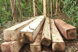 Clip: Cận cảnh bãi tập kết 'lâm tặc' phá nát núi Chư Jú, xẻ cổ thụ lấy gỗ