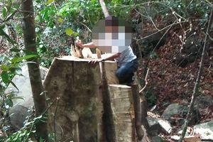 Phá rừng tại Gia Lai: Vô số cây cổ thủ bị đốn hạ trên đỉnh Chư Jú