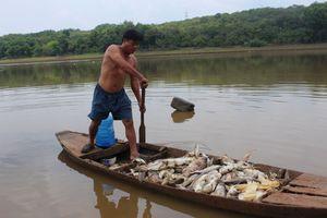 Đau xót nhìn hàng chục tấn cá chết trắng đập