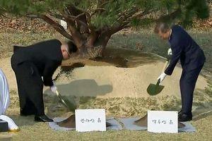 Ông Kim Jong-un tươi cười trồng cây với ông Moon Jae-in trên đất Hàn