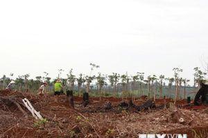 Điều tra vụ san ủi trái phép 2.000m2 đất lâm nghiệp tại Đà Lạt