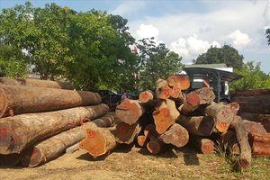 Bộ Quốc phòng vào cuộc điều tra vụ gỗ lậu sát Đồn Biên phòng Đắk Lắk