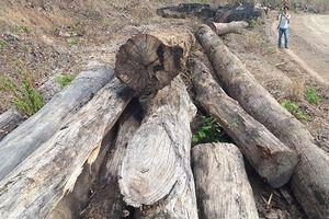 Biên phòng lên tiếng về vụ bắt gỗ lậu và trùm Phượng 'râu' ở Đắk Lắk