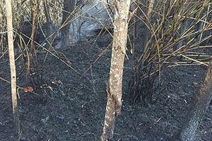 Cơn mưa 'bí ẩn' hỗ trợ lực lượng PCCC dập tắt vụ cháy rừng phòng hộ núi Cậu