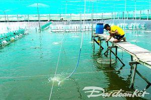 Muốn phát triển ngành tôm phải dựa vào công nghệ cao