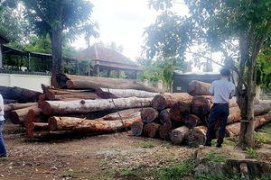 Vụ bắt trùm gỗ lậu Phượng 'râu': Đình chỉ công tác 4 cán bộ đồn Biên phòng