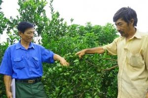 Thoát nghèo nhờ trồng cây ăn quả
