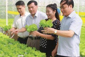 Yên Bái với hướng phát triển bền vững từ nông nghiệp công nghệ cao