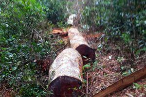 Gia Lai: Kỷ luật 5 cán bộ vì để 'mất rừng' tại Kbang