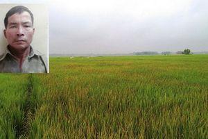 Mâu thuẫn, người đàn ông mua thuốc diệt cỏ phun cháy 1.700 mét vuông lúa của gia đình đối phương