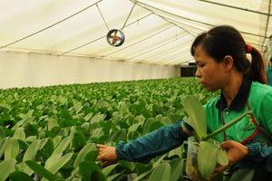 Phát triển nông nghiệp công nghệ cao: Tăng cường liên kết '5 nhà'