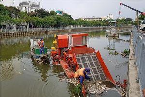 Cá chết nổi trắng kênh ở Sài Gòn sau mưa đầu mùa