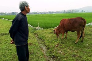 Vụ trâu bò 'cõng' phí đồng cỏ: Yêu cầu kiểm điểm cá nhân, tập thể liên quan