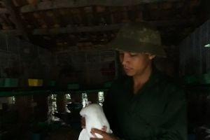 Vươn lên thoát nghèo nhờ mô hình nuôi chim bồ câu