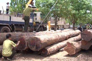 Đắk Lắk: Đình chỉ công tác 4 lãnh đạo Đồn Biên phòng liên quan đến vụ gỗ lậu do Phượng Râu cầm đầu