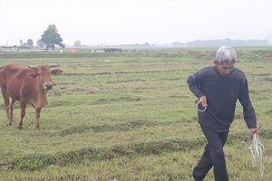 Kiểm điểm tập thể, cá nhân liên quan vụ nuôi trâu bò phải đóng phí đồng cỏ